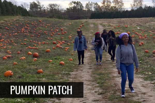 pumpkinpatch-pic